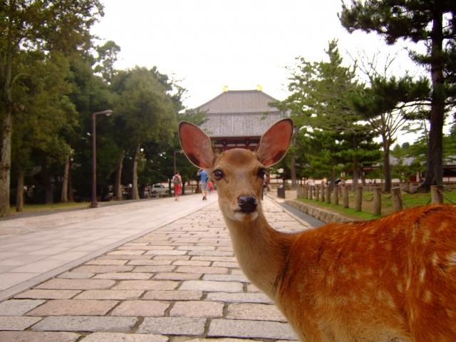 奈良ー(奈良公園)
